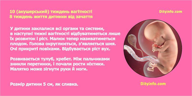 Десятий тиждень вагітності