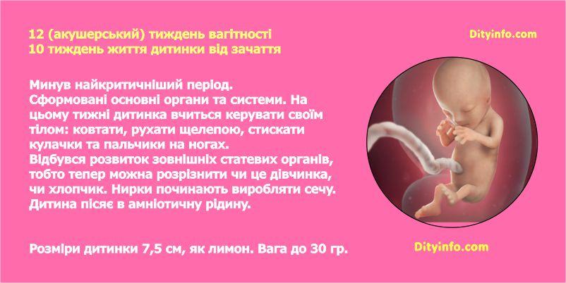 Дванадцятий тиждень вагітності