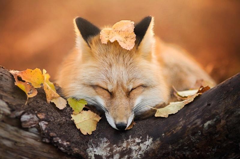 Народні прикмети про осінь