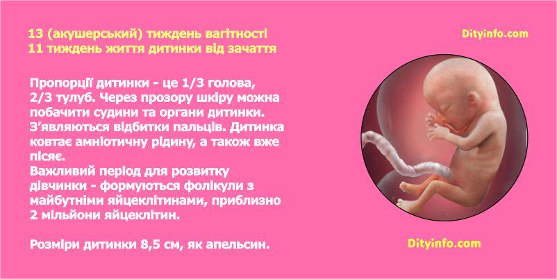 Тринадцятий тиждень вагітності