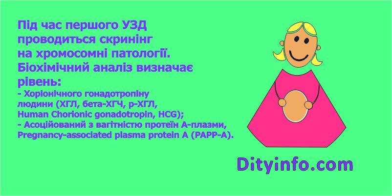 13_tyzhden_vagitnosti_3.jpg (62.98 Kb)