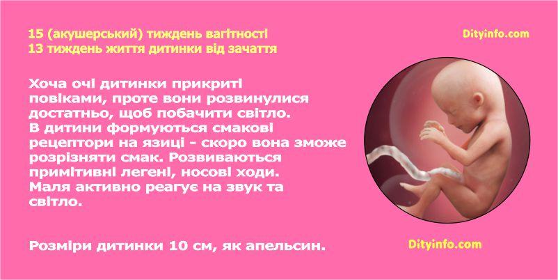 П'ятнадцятий тиждень вагітності