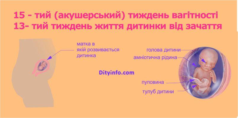 15_tyzhden_vagitnosti_4_2.jpg (46.09 Kb)