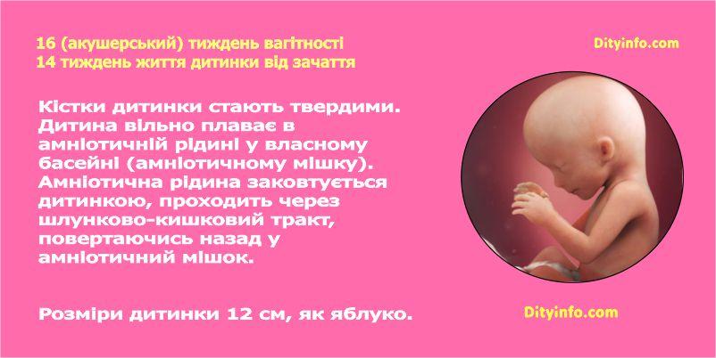 Шістнадцятий тиждень вагітності