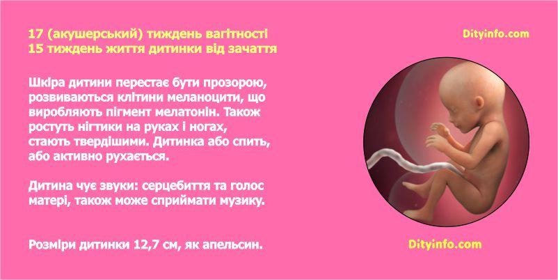 17_tyzhden_vagitnosti_2_foto.jpg (.33 Kb)