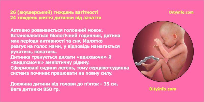 Двадцять шостий тиждень вагітності