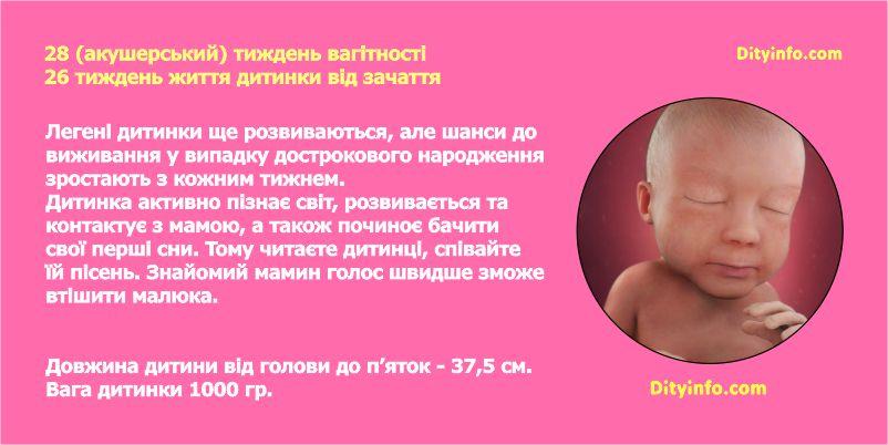 Розвиток дитинки під час третього триместру вагітності