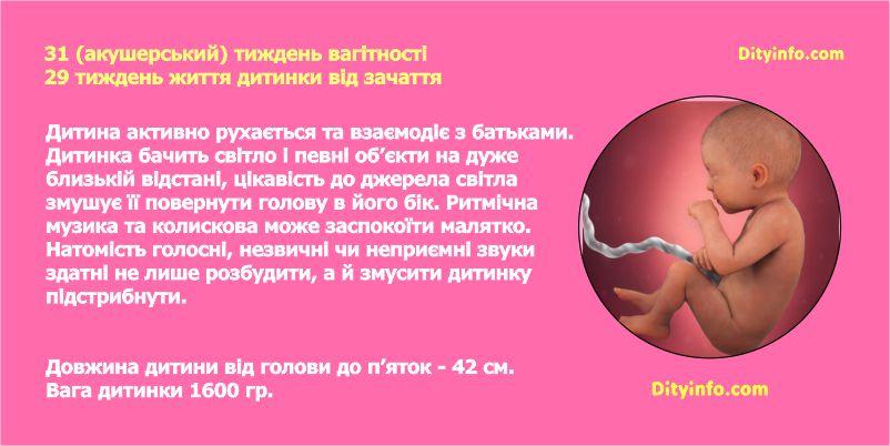 Тридцять перший тиждень вагітності