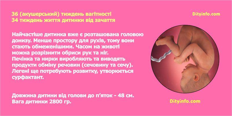Тридцять шостий тиждень вагітності