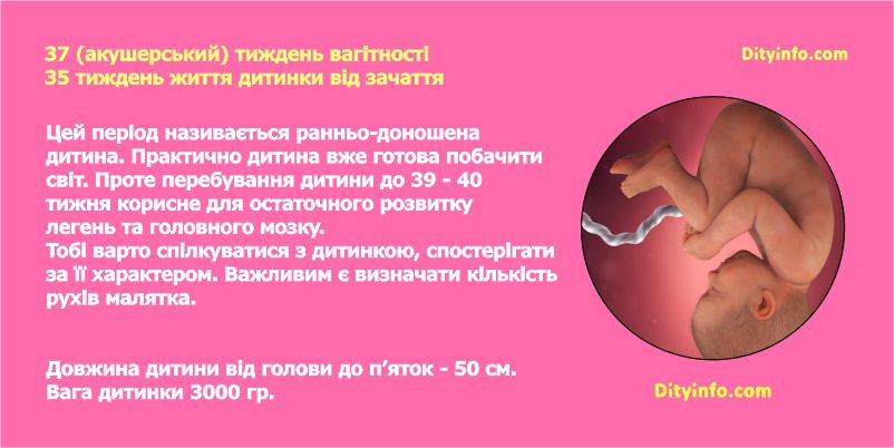 Тридцять сьомий тиждень вагітності