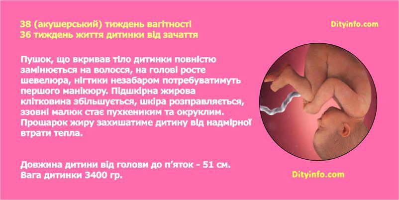 Тридцять восьмий тиждень вагітності