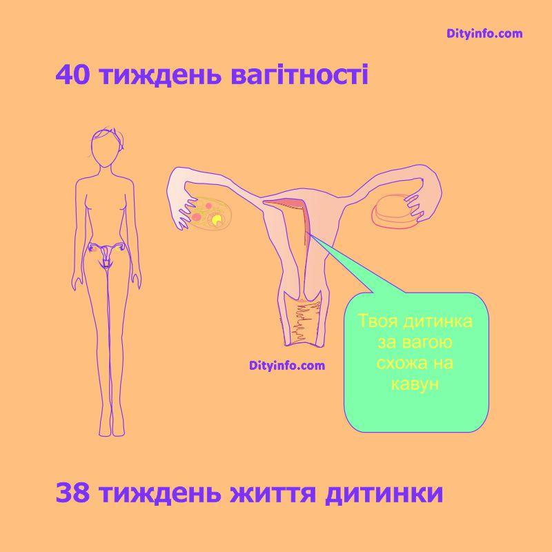 40_tyzden_vagitnosti_2.jpg (58.62 Kb)