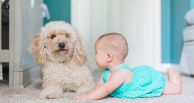 Яку тваринку завести для дітей: плюси і мінуси домашніх улюбленців