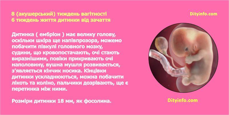 Восьмий тиждень вагітності
