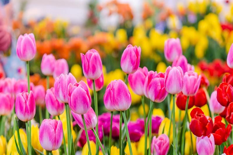 Сценарій свята - Зустріч Весноньки-весни