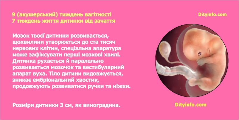 Дев'ятий тиждень вагітності