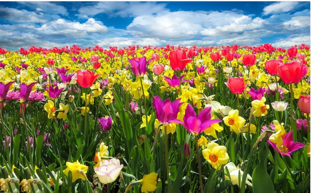 Сценарій свята - Пригоди Весняночки
