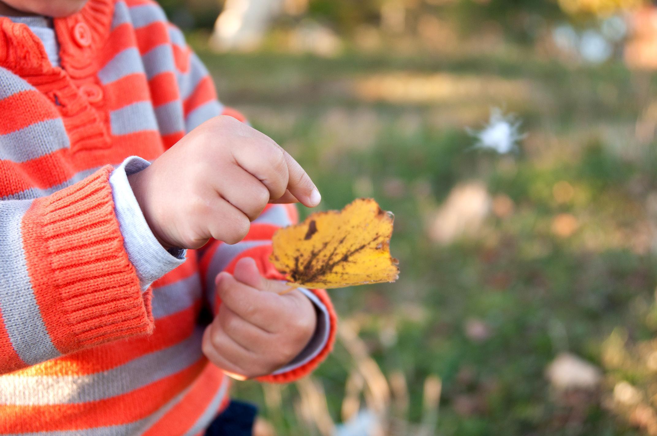 Чому листя восени змінює колір? Досліджуємо з дітьми