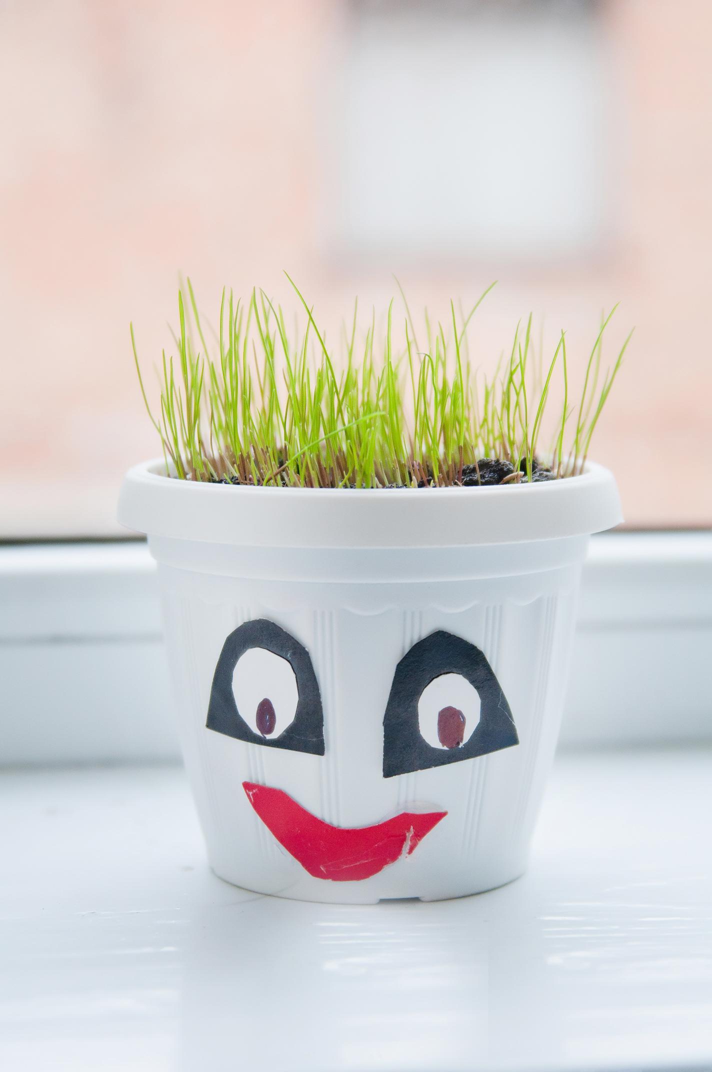 Спостерігаємо з дітьми за рослинами