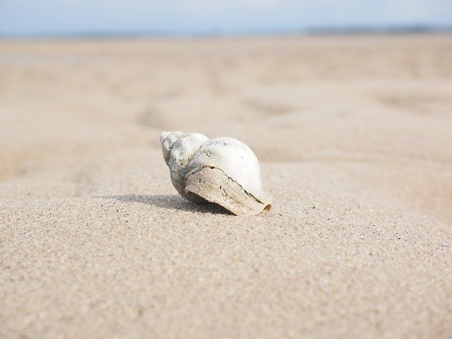 Чому в морі є перли і мушлі. Народна легенда