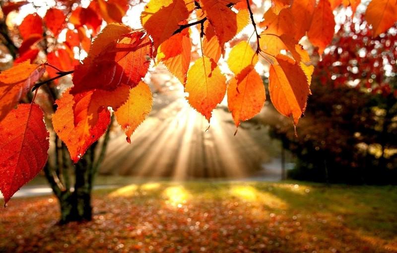 Прислів'я та приказки про осінь