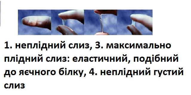 plidnist_po_slyzu.jpg (62.4 Kb)