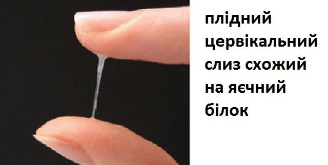 plidnuj_cervicalnuj_slyz.jpg (47.13 Kb)