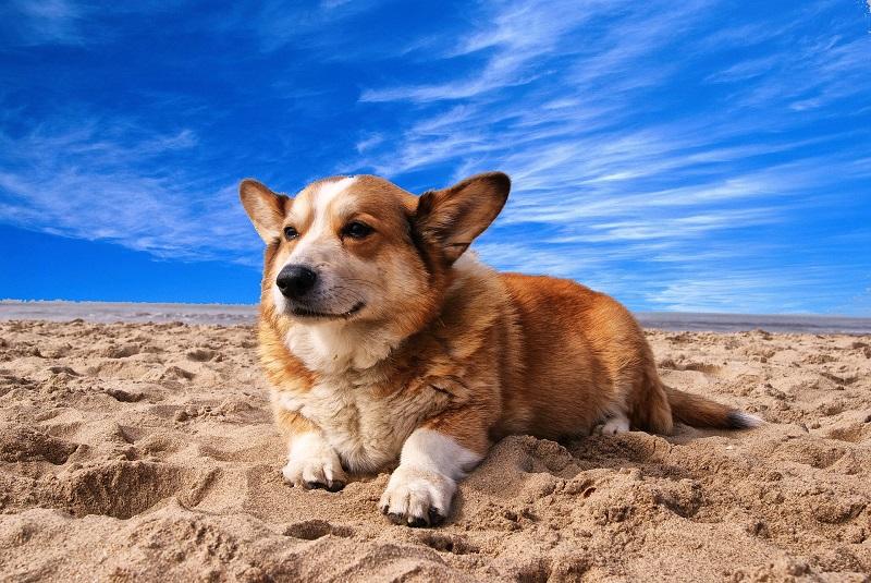 5 порід собак, що ідеально підходять для дітей