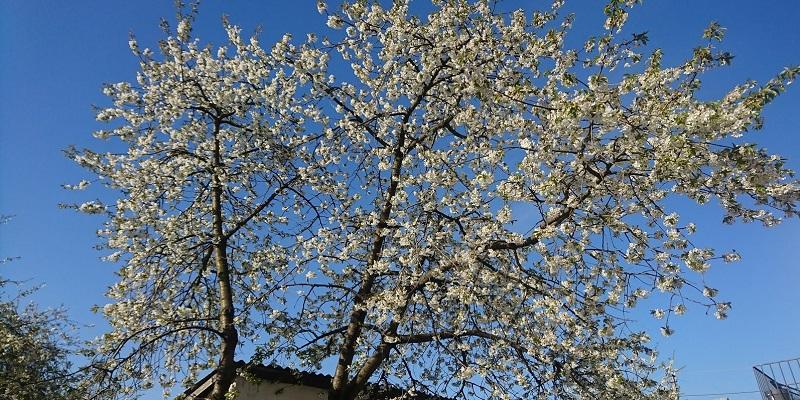 Вірші про веснянки та весну