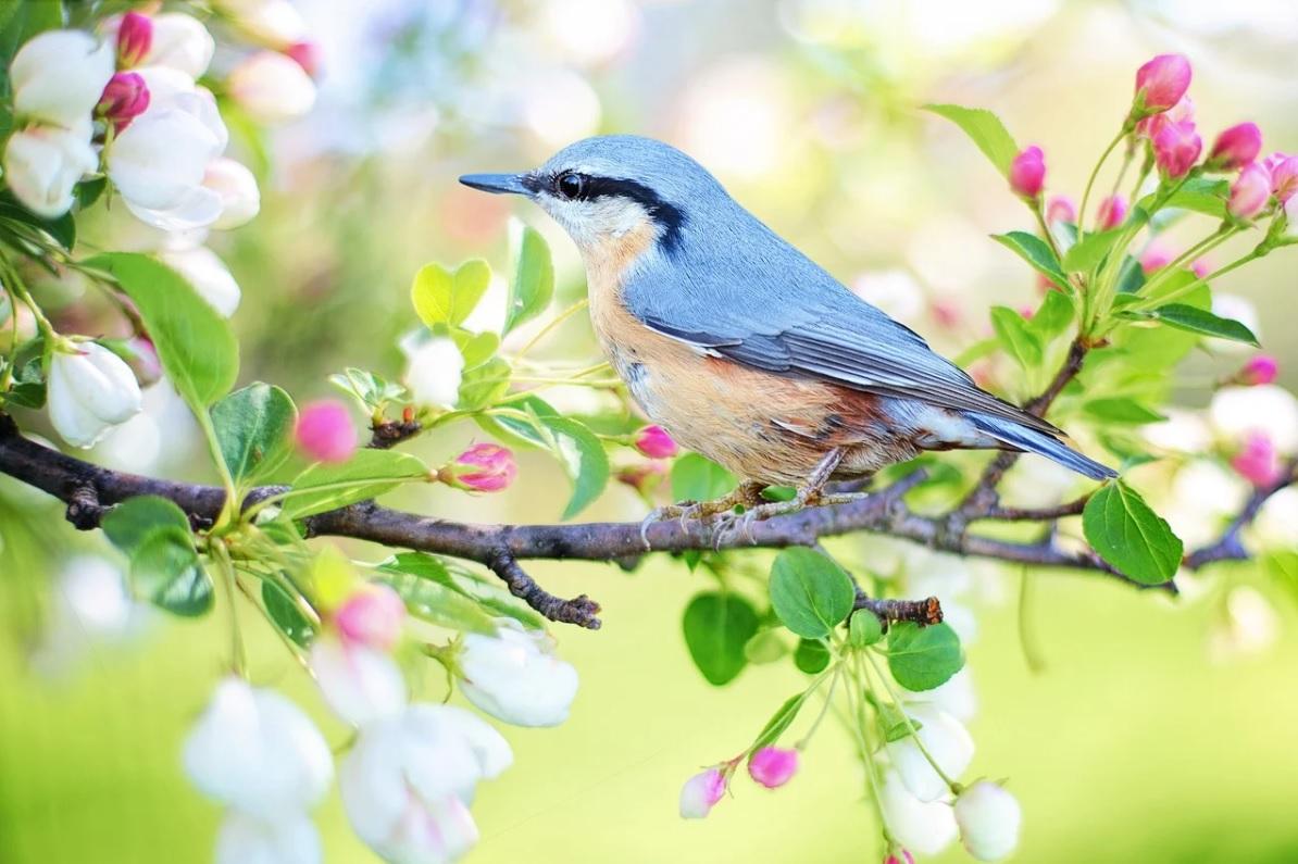 Сценарій свята - Весна-Весняночка