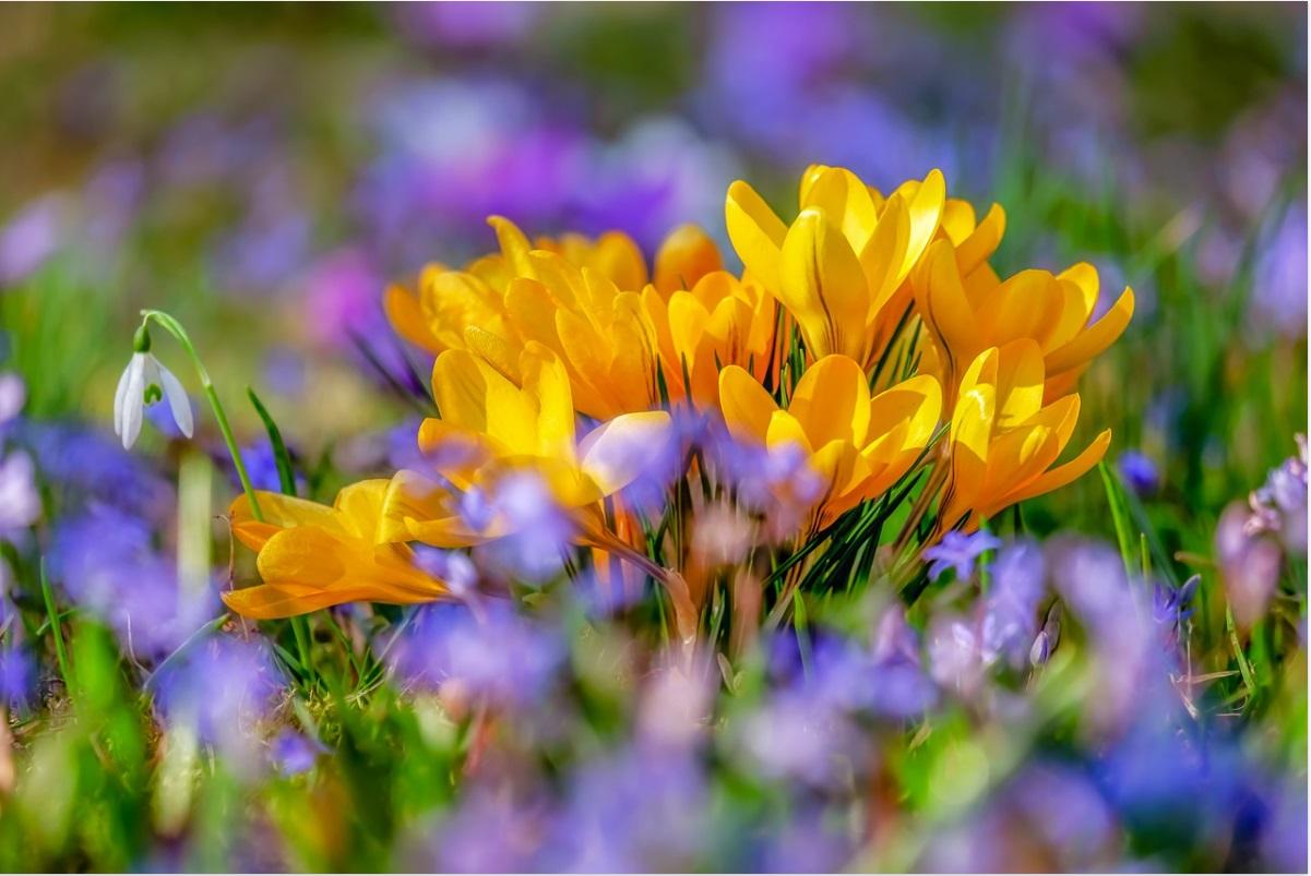 Свято Весни та свято Мами. Сценарій свята