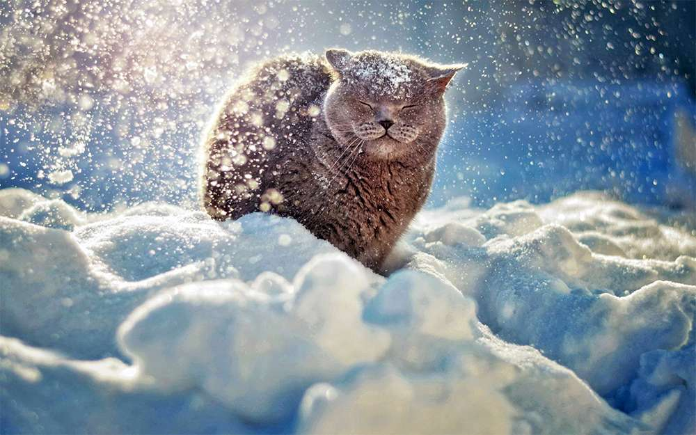 winter-cat-photograph.jpg (85.63 Kb)